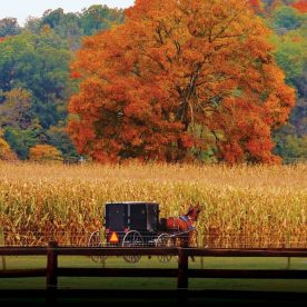 Horse drawn buggy in Fall